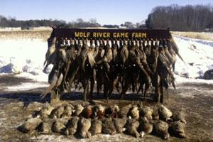 Wolf River Game Farm