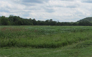 Federal Valley Pheasant Farm
