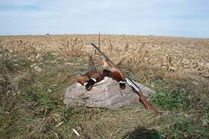 Hopewell Pheasantry