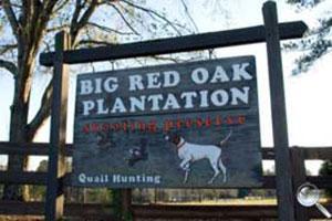 Big Red Oak Plantation Logo