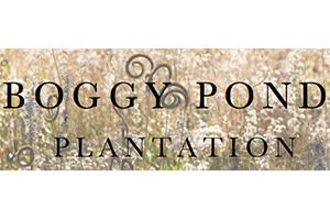 Boggy Pond Plantation