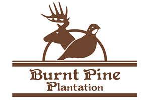 Burnt Pine Plantation Logo