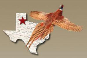 Texas Panhandle Pheasant Hunts
