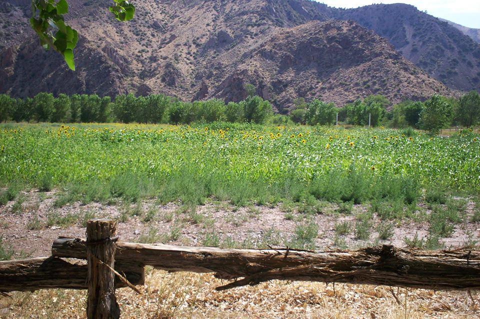 Clover Mountain Ranch