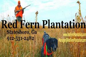 Red Fern Plantation