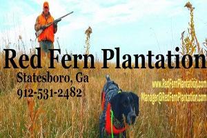 Red Fern Plantation Logo