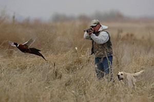 Diamond Ranch Pheasant Hunts LLC
