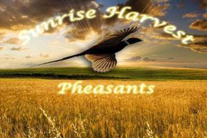 Sunrise Harvest Pheasants Logo
