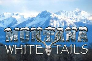 Montana Whitetails Logo