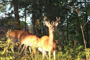 Richwoods Hunting