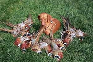A&D Zoss Pheasant Hunting