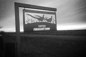 Kieffer Pheasant Hunting