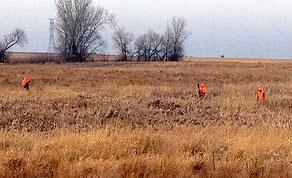 Pheasant Haven Farms