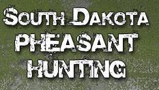 South Dakota Pheasant Hunts