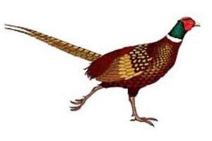 Stevens Pheasant Hunting