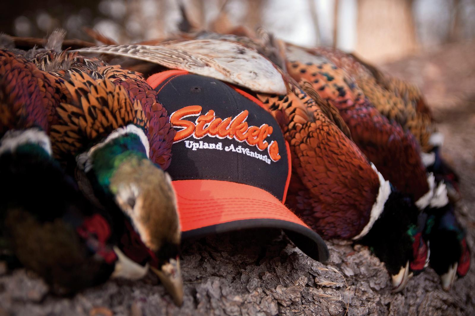 Stukel's Birds & Bucks