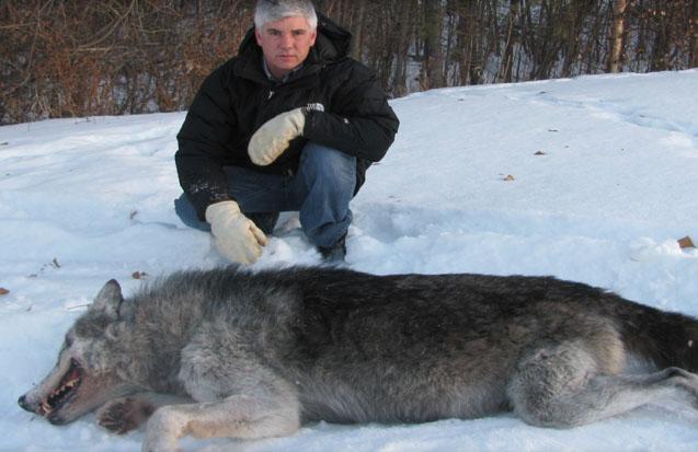 Wolf Hunts